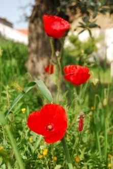 19d2e-poppiespoppies