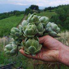 handful of artichokes