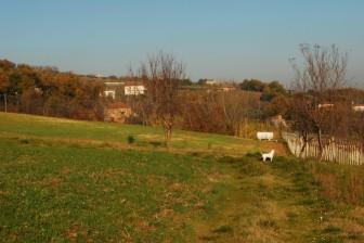 Dog on Location